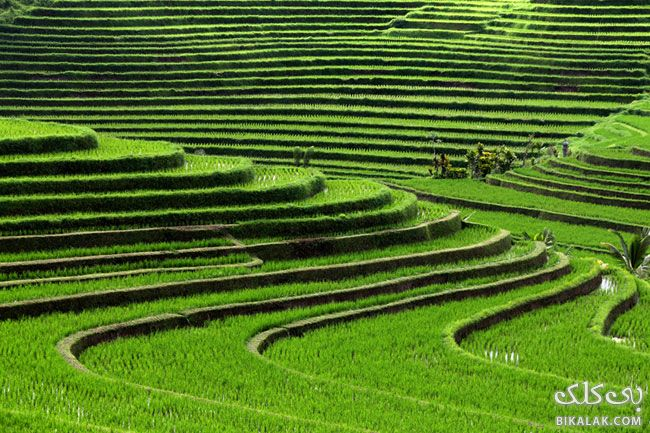 08-bali_rice_terraces
