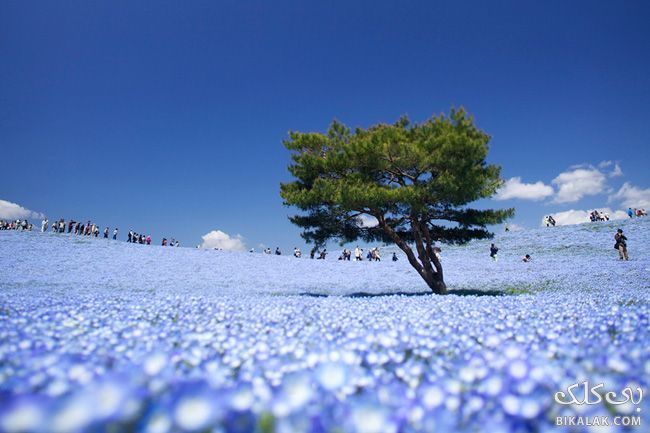 12-hitachi_seaside_park